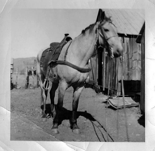 1958_Buck