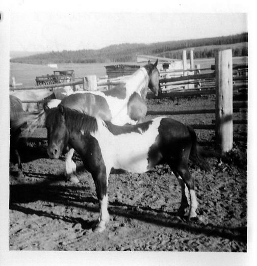 1969_-Rex-Pony